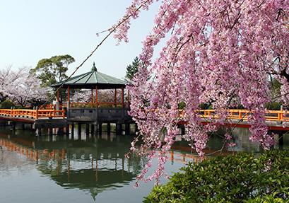 九華公園の写真